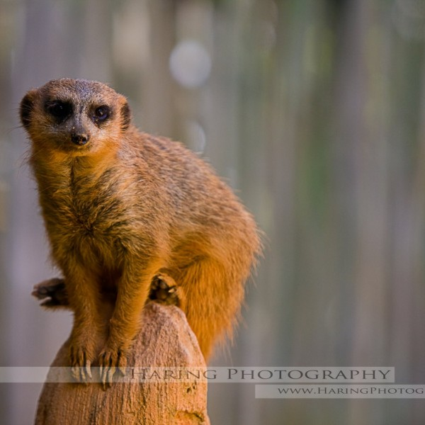 Photographer's Favorite - Miami Zoo - Animal Photos