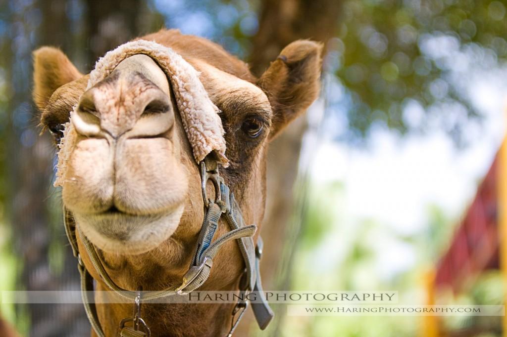 Photographer's Favorite – Miami Zoo – Animal Photos, Miami Wedding Photographers | Häring Photography, Indian Wedding Photographer in Florida, Best Muslim, Hindu - South East Asian Wedding Photographers