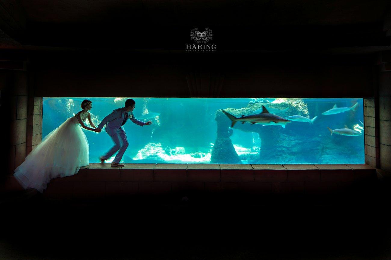 Corey + Kevin in Atlantis | Atlantis Paradise Island – Bahamas Wedding Photo Brochure, Miami Wedding Photographers | Häring Photography, Indian Wedding Photographer in Florida, Best Muslim, Hindu - South East Asian Wedding Photographers